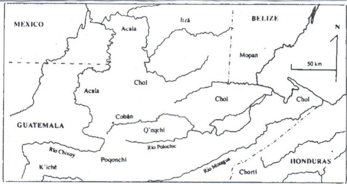 Mapachicoyoguito